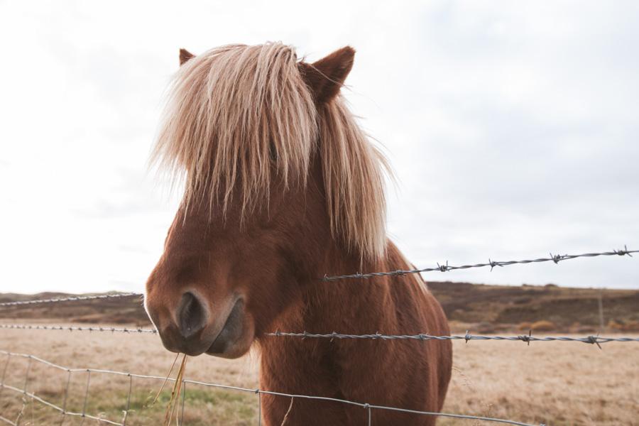 De Rekyavik à Vik en passant par Geysir | Islande (jour 2) 3